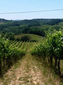 Tuscanvineyard